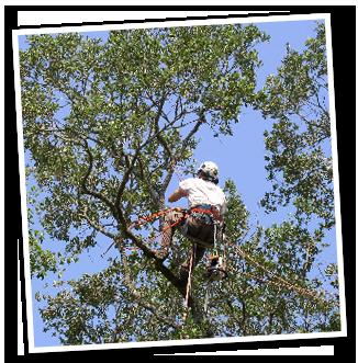 Arborist i aktion