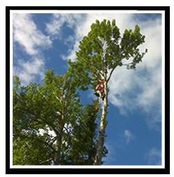 Pris-för-trädfällning1