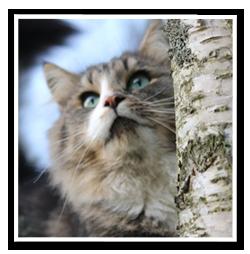 raddning-av-katt-i-trad