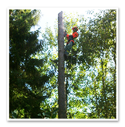 Pris-för-trädfällning2