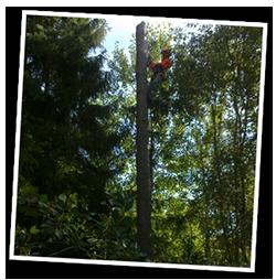 Trädfällning-1-Right
