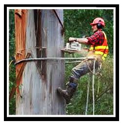 Trädfällningsarbete