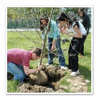 plantering-av-träd1