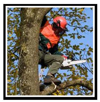 trädfällning-av-arborist2