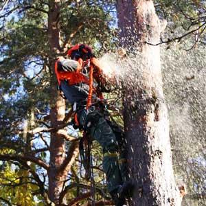 en-bra-trädfällare