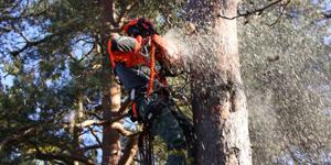 Avancerad-trädfällning