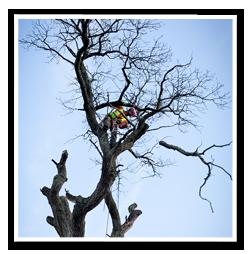 Avancerad-trädfällning1