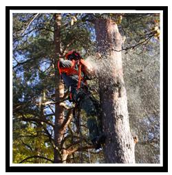 Avancerad-trädfällning2