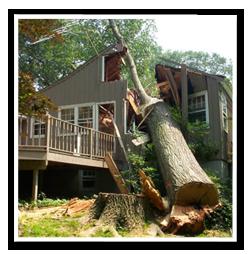 Trädfällningstips-för-amatörer
