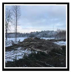 Skogsavverkning1