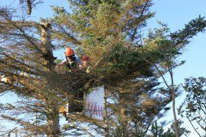 tree-surgery-1821157_1920