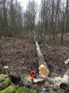 tree-felling-2191064_1920
