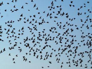 birds-2799993_1920