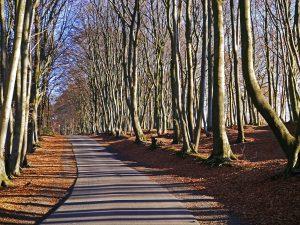 teutoburg-forest-1882718_1920