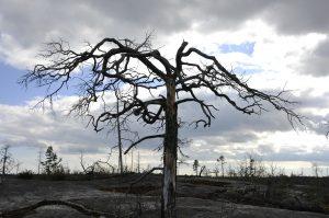 tree-138563_1920