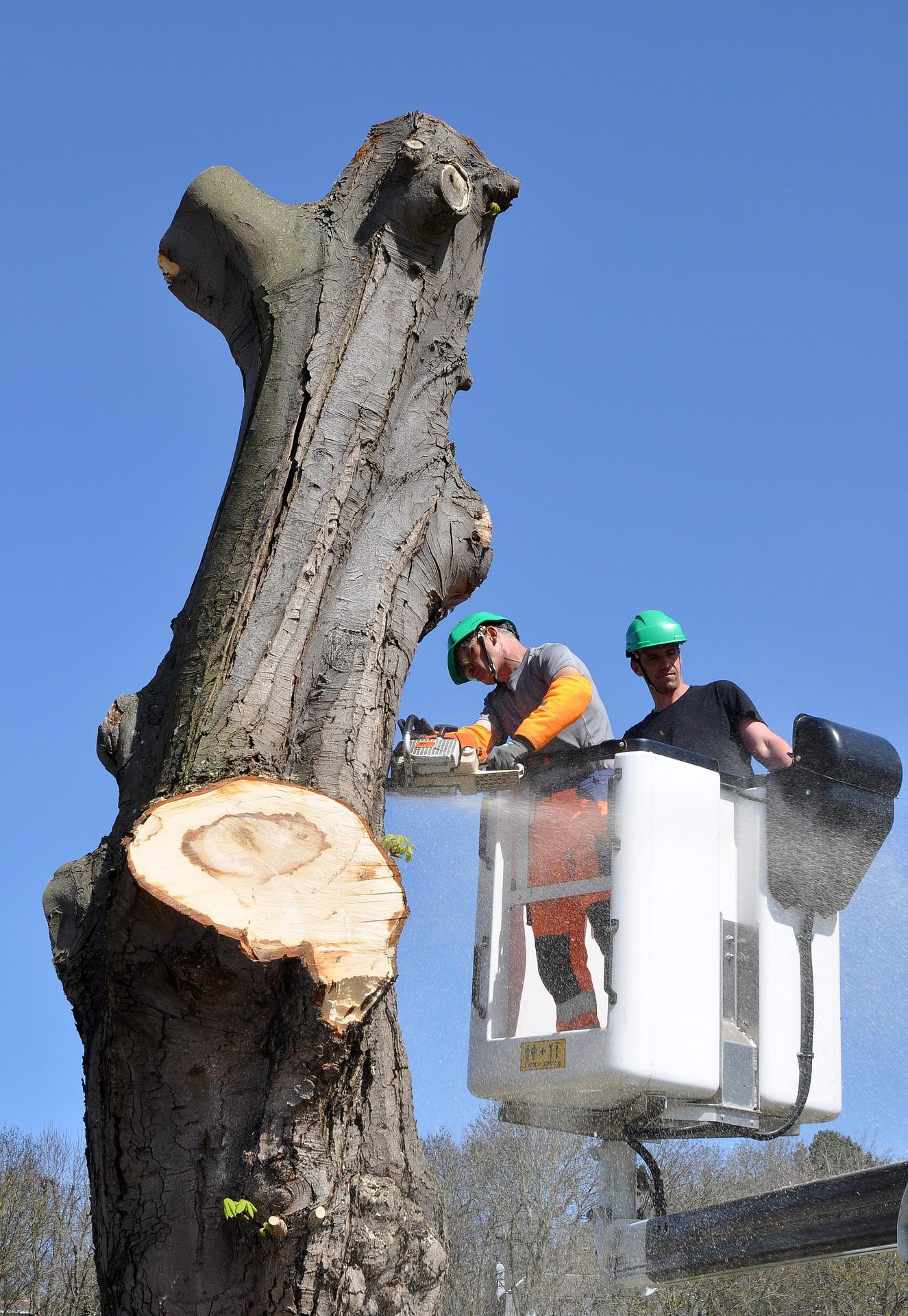 trädfällning sollentuna pris