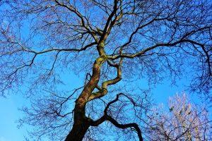 tree-2961670_1920