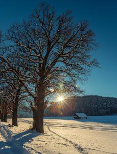 tree-3042128_1920