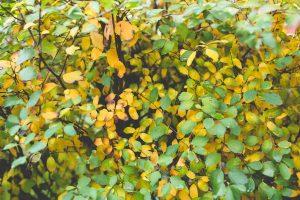 autumn-branch-bright-6240