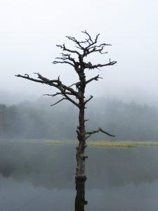 lake-2756264_1920