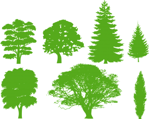 trees-309435_1280
